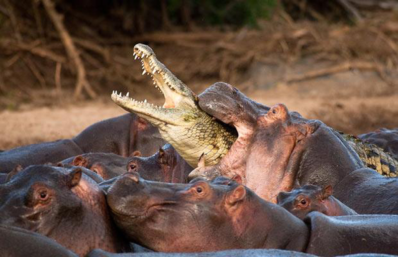top 10 most dangerous animals in the world - most agressive animals The World's Most Dangerous Animals - 10 of the World's Most Dangerous Animals Interesting and Scary Facts - Scary Facts - Strange Facts